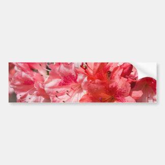 Beautiful Pink Azaleas Bumper Sticker