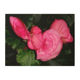 Beautiful Pink Begonia - wood wall fine art prnt Wood Wall Art