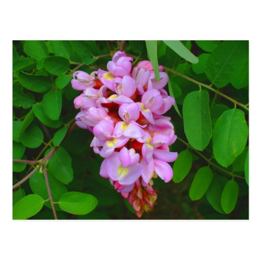 Beautiful Pink Blossom Flowers Postcard