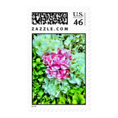 Beautiful Pink Cream Green Hydrangea Flowers Postage