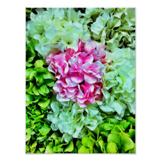 Beautiful Pink Cream Green Hydrangea Flowers Poster