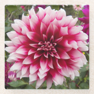 Beautiful Pink Dahlia Floral Glass Coaster