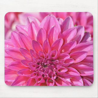 Beautiful pink dahlia flower blossoms mouse pad