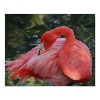 Beautiful Pink Flamingo Poster. Poster