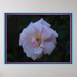 Beautiful Pink Flower Poster