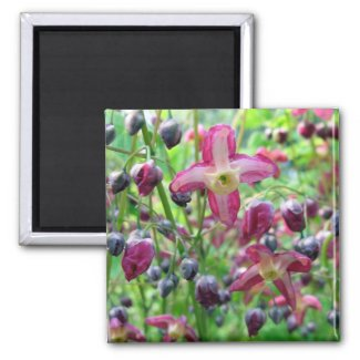 Beautiful Pink Flowers Blue Buds Spring Photo Magnet