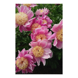 Beautiful Pink Flowers Poster