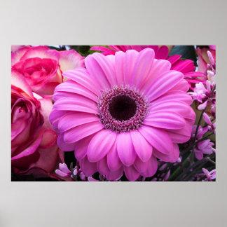 Beautiful pink gerbera flower poster