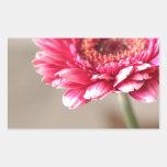 Beautiful pink gerbera on beige rectangular sticker