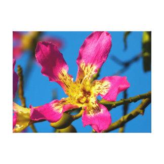 Beautiful pink kapok tree flower canvas print