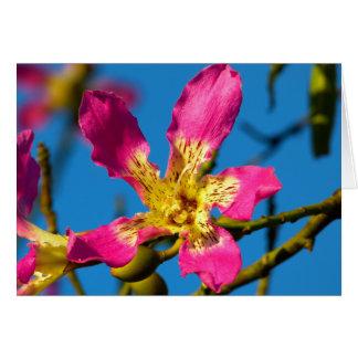 Beautiful pink kapok tree flower card