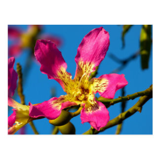 Beautiful pink kapok tree flower postcard