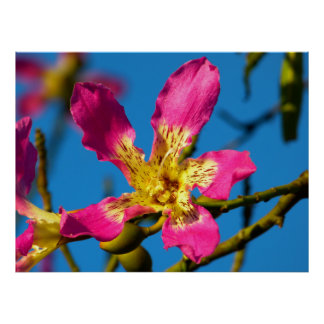 Beautiful pink kapok tree flower poster