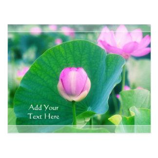 Beautiful Pink Lotus Bud Flower Green Leaf Blossom Postcard
