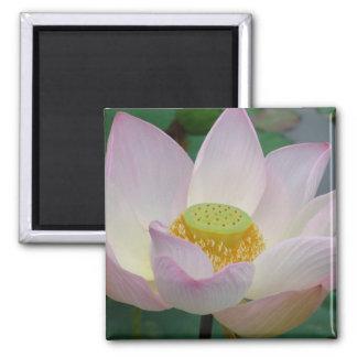 Beautiful pink lotus flower fridge magnets