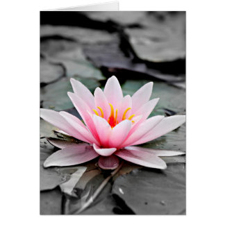 Beautiful Pink Lotus Flower Waterlily Zen Art Card