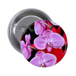 Beautiful pink moth orchids buttons