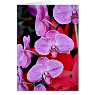 Beautiful pink moth orchids cards