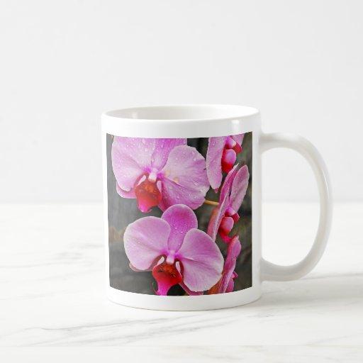 Beautiful pink moth orchids coffee mug