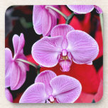 Beautiful pink moth orchids drink coasters
