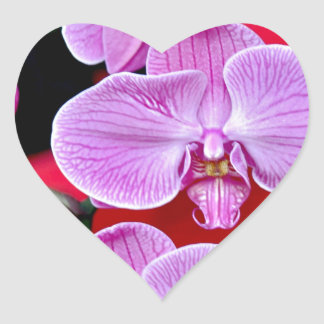 Beautiful pink moth orchids heart sticker