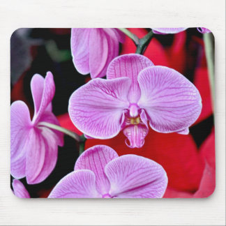 Beautiful pink moth orchids mouse pad