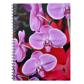 Beautiful pink moth orchids spiral note book