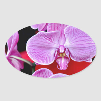 Beautiful pink moth orchids oval sticker