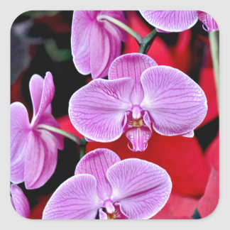 Beautiful pink moth orchids square sticker