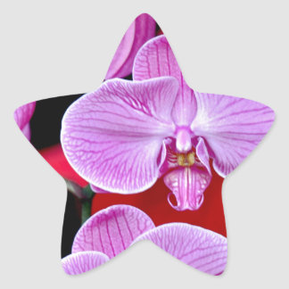 Beautiful pink moth orchids star sticker