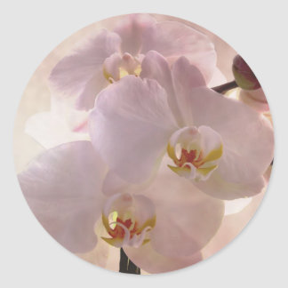 Beautiful Pink Orchid Classic Round Sticker