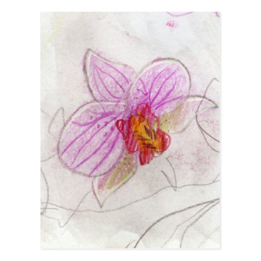 beautiful pink orchid drawing postcard