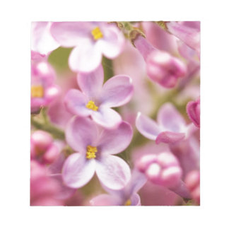Beautiful Pink Orchid Flowers Memo Notepads
