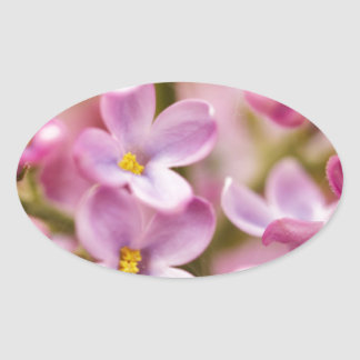 Beautiful Pink Orchid Flowers Oval Sticker