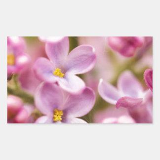Beautiful Pink Orchid Flowers Rectangular Sticker