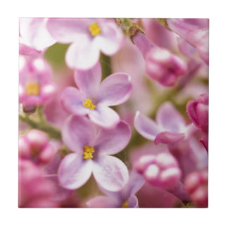 Beautiful Pink Orchid Flowers Small Square Tile