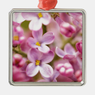 Beautiful Pink Orchid Flowers Square Metal Christmas Ornament