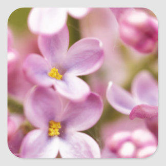 Beautiful Pink Orchid Flowers Square Sticker