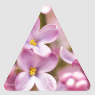 Beautiful Pink Orchid Flowers Triangle Sticker