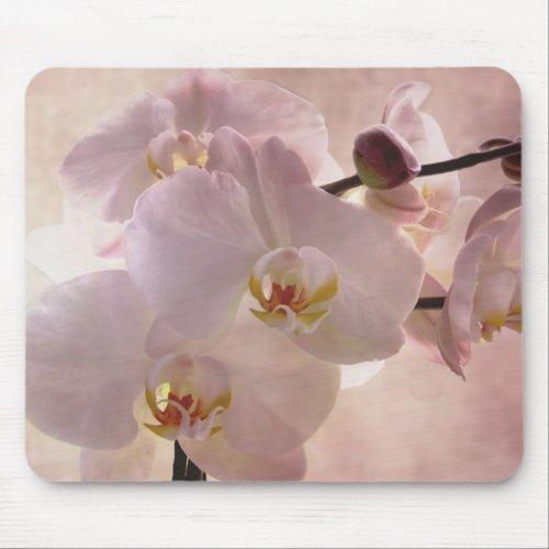 Beautiful Pink Orchid mousepad mousepad