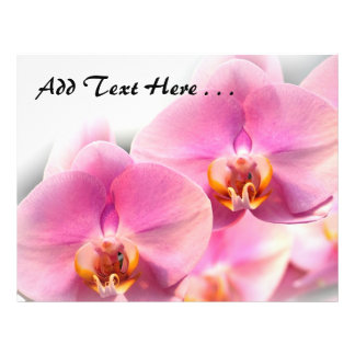 """Beautiful Pink Orchids on a Soft Background 8.5"""" X 11"""" Flyer"""