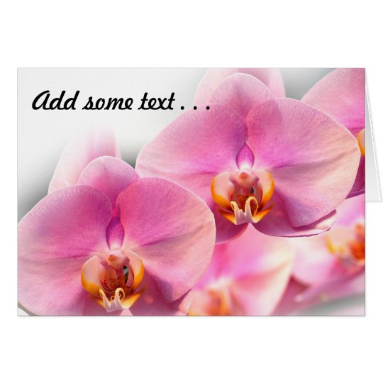 Beautiful Pink Orchids on a Soft Background Card