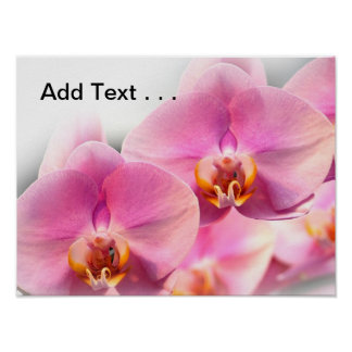 Beautiful Pink Orchids on a Soft Background Poster