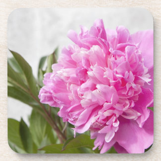 Beautiful pink peony flower floral coasters