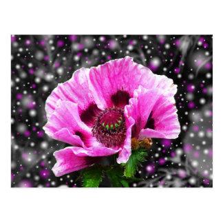 Beautiful pink poppy flower postcard