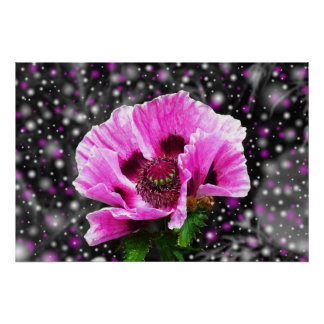 Beautiful pink poppy flower poster
