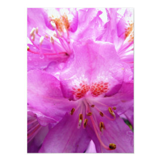 Beautiful Pink Rhododendron Pontica 5.5x7.5 Paper Invitation Card