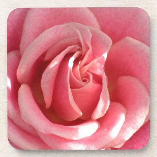 Beautiful pink rose bloom beverage coaster