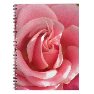 Beautiful pink rose bloom note book