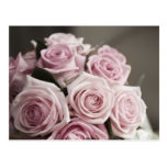 Beautiful pink rose bouquet post cards